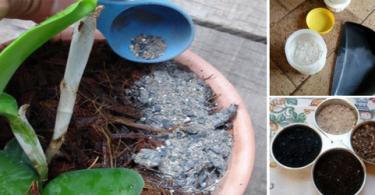 adubo-organico-para-orquideas