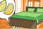 Limão na cama