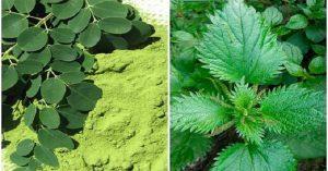 Poderosas plantas