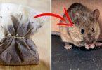 afaste-as-aranhas-e-ratos-da-sua-casa.