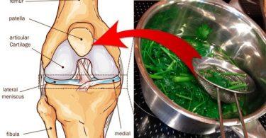 remedio-que-vai-curar-dor-articular-e-muscular